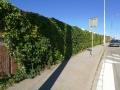 Ozeleněná zeď v Novém Lískovci